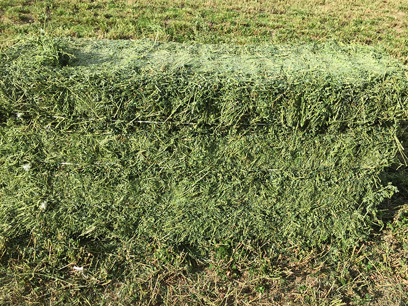 Alfalfa 3rd Cutting 2016